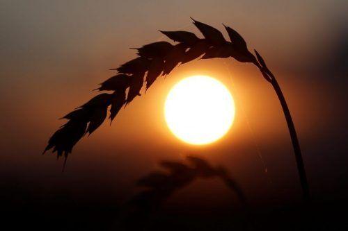 Изменение климата может помешать Украине стать аграрной сверхдержавой, - Atlantic Counsil