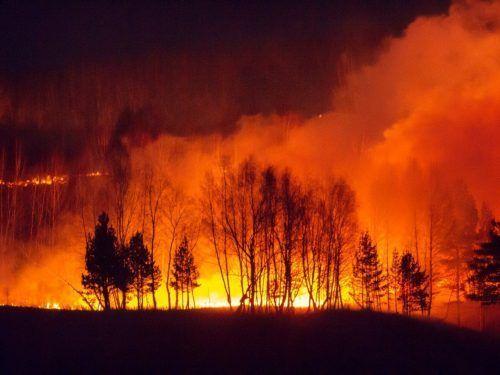 ТОП-5 крупнейших экологических катастроф 2020 года в Украине