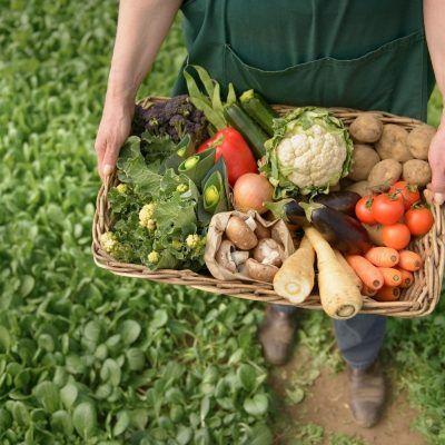 Эксперт пояснила, почему украинские агрохолдинги переходят на органическое производство