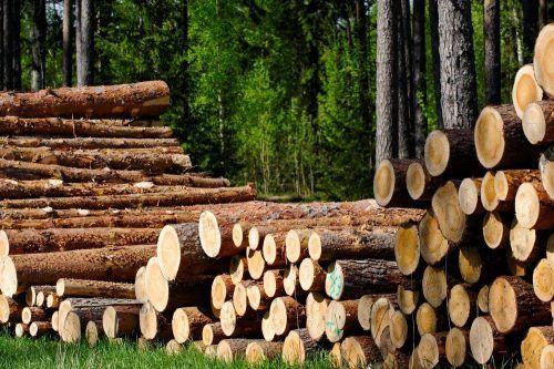 Працівник «паперової сфери» за рік списує 17 хвойних дерев: ТОП фактів про виробництво паперу