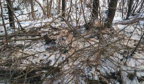 На Тернопольщине 10 работников лесхоза оштрафовали на 2400 грн за халатность