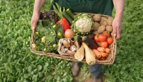 Україна входить у першу трійку експортерів органічної продукції до Європи, – міністр АПК