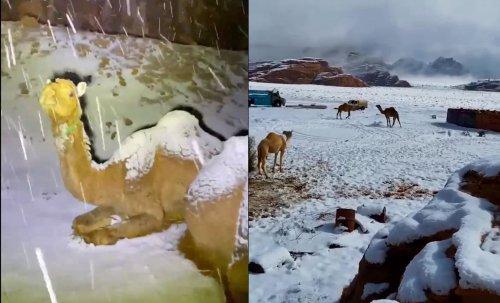 Впервые за много лет страны Ближнего Востока накрыли снегопады. Яркие фото и видео