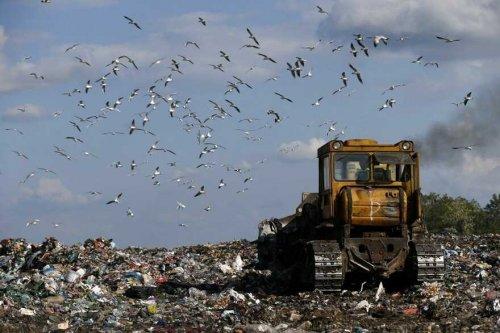 Сміттєвий полігон на Київщині розрісся до катастрофічних розмірів. Фото