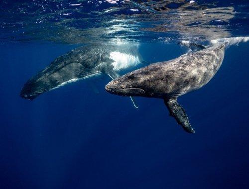 19 лютого – Всесвітній день захисту морських ссавців: як долучитися