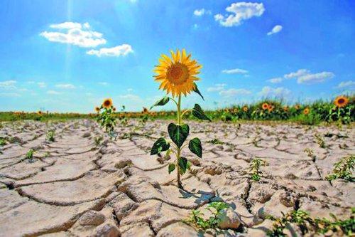 Почти половина сельхозземель Украины может потерять плодородие – исследование