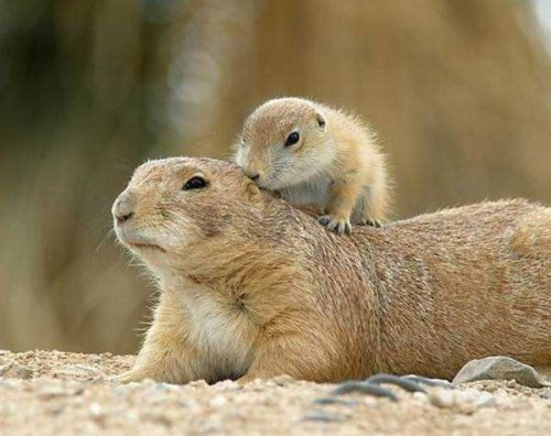 До Червоної книги внесуть 171 новий вид тварин: з'явився оновлений перелік