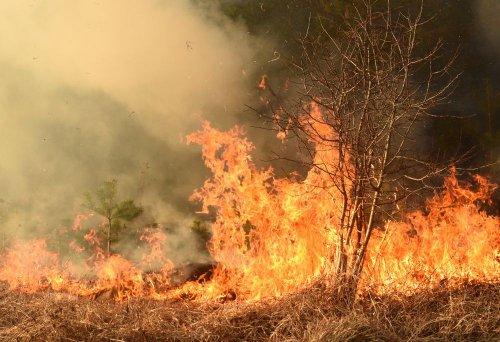 В Україні почався сезон пожеж через спалювання сухої трави й очерету. Відео