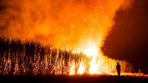 Вблизи Херсона горят Днепровские плавни. Видео