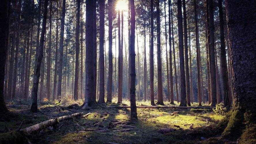 В Украине провели аудит лесхозов: нарушений обнаружили на 243 млн грн