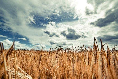 Украина поставила амбициозную цель по сокращению выбросов агросектора