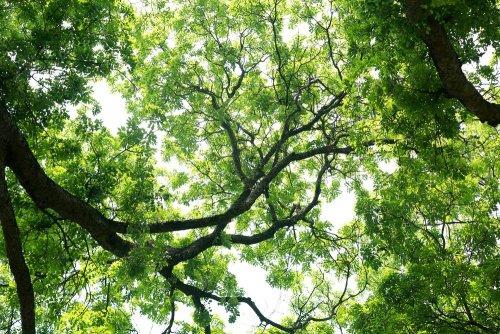 Недельный дайджест экологических мероприятий: как принять участие бесплатно