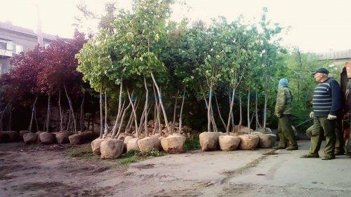 Из бюджета Никополя выделят почти миллион гривен на молодые деревья и кусты