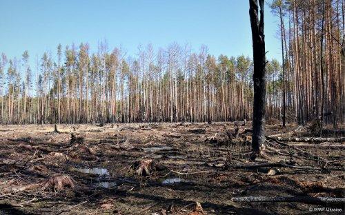 На Житомирщине нашли незаконные вырубки деревьев в лесхозе