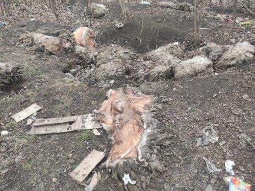 У Харкові знайшли звалище біологічних відходів поблизу дитячої лікарні. Фотофакт