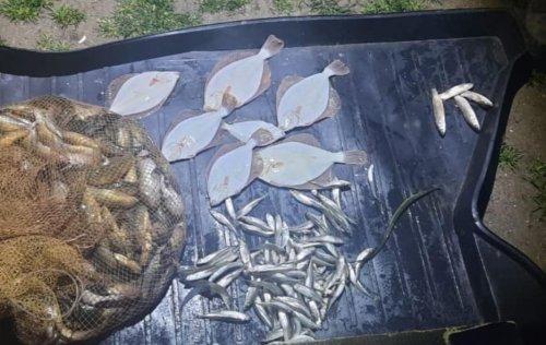 В Запорожской области задержали браконьеров с краснокнижной рыбой