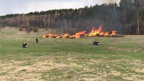 Пожежі знищили тисячі гектарів лісу: Держекоінспекція розкрила жахливу статистику