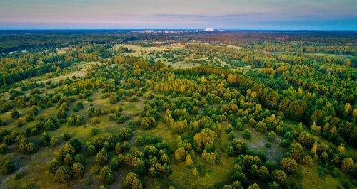 В «Слузі народу» розповіли про «чорних» бізнесменів Чорнобиля: рубають ліс та вивозять метал