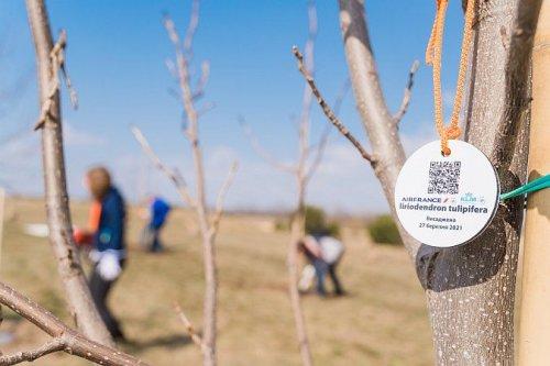 Авиакомпании Air France и KLM высадили 28 тюльпановых деревьев в Украине. Фото