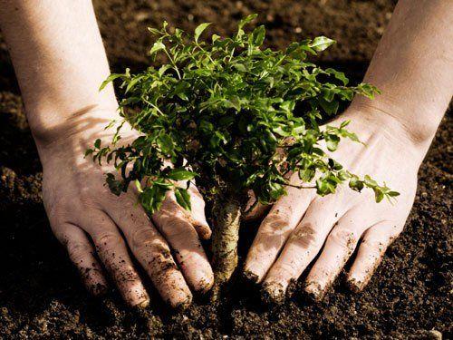 Українці висадили найбільше дерев за день під час всесвітньої екологічної акції