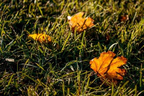 Не сжигай: активисты дали советы, как правильно избавиться от опавших листьев