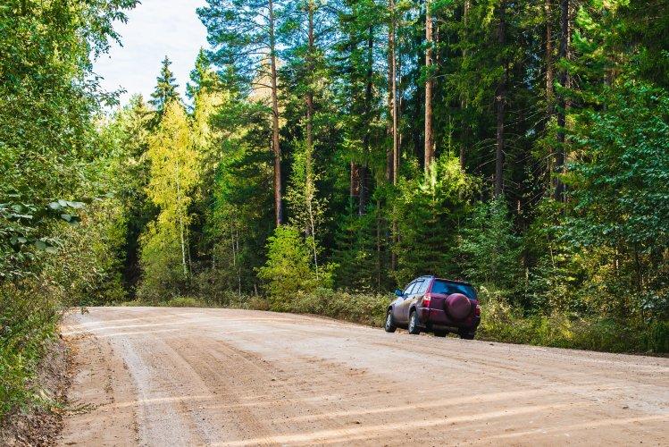 Ради строительства автодороги под Киевом уничтожат гектара леса - экологи