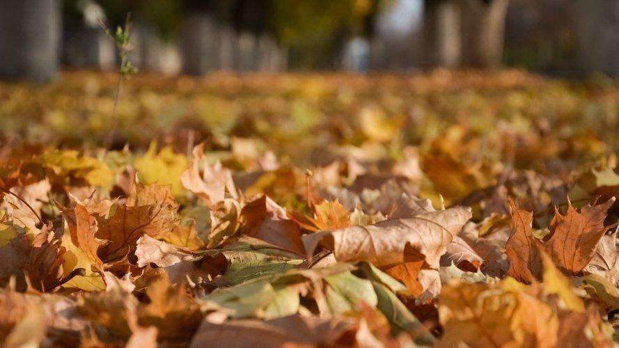 У Дніпрі пройшов рейд на паліїв листя: порушників оштрафували. Фото