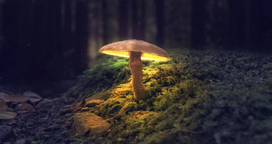 Начали производить экологическую кожу из грибов