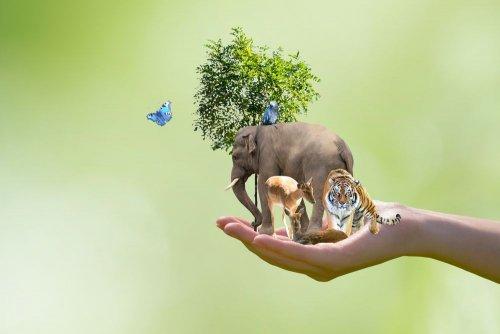 Мир отмечает День защиты животных: все, что нужно знать