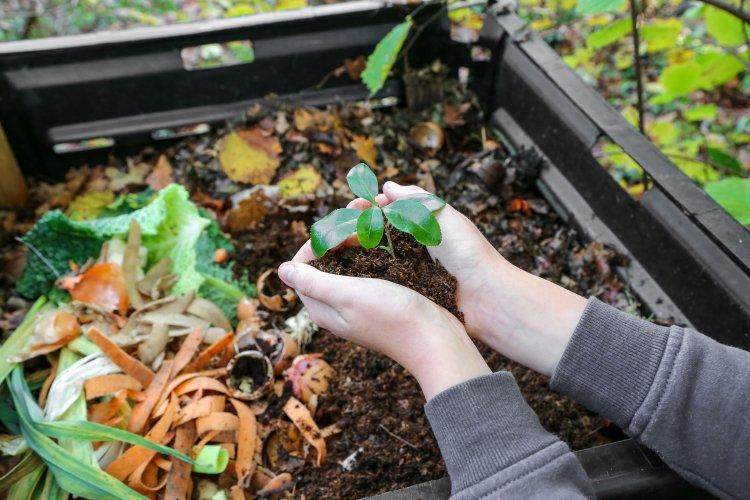 Українців безплатно навчать компостувати органіку