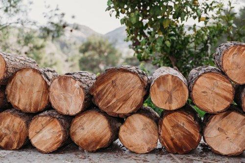 На Хмельниччині незаконно нарубали дерев на мільйон гривень