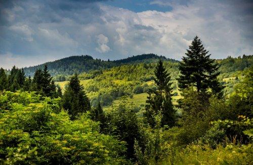 У Чернігові проходить еко-акція: всіх охочих запрошують посадити власне дерево