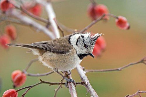 1 квітня відзначають Міжнародний день пернатих: названо птаха року в Україні