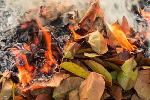 Поджигатели листья и сухостоя: нарушителей ждут рейды экоинспекторов и штрафы