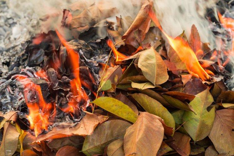 Палії листя та сухостою: на порушників чекають рейди екоінспекторів і штрафи