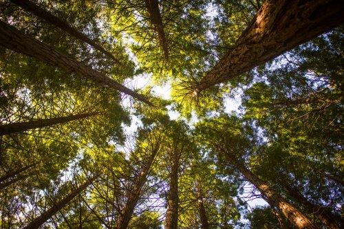 В Украине началась инвентаризация лесов: Кабмин выделил 20 млн грн