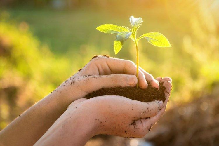 Які питання розгляне Комітет з питань екологічної політики: порядок денний на 2 червня