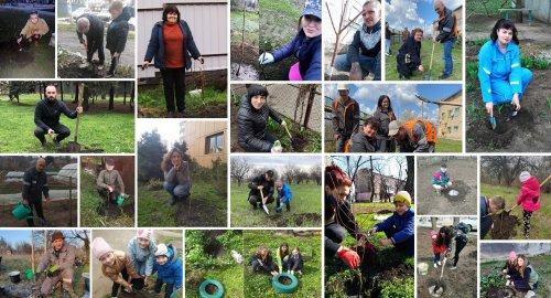 Команда Recycling Solutions высадила деревья в разных уголках Украины. Фотофакт