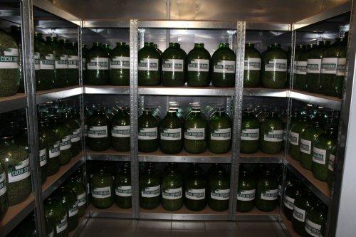 На Житомирщині у спеціальному банку зберігають 800 кілограмів насіння дерев: фото