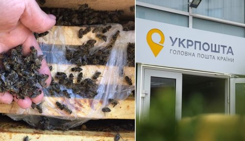 """""""Укрпошта"""" потрапила в гучний скандал через смерть 8 млн бджіл: усі подробиці"""