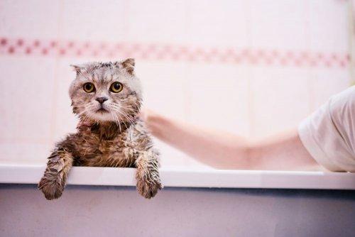 Украинцев призвали реже пользоваться ванной