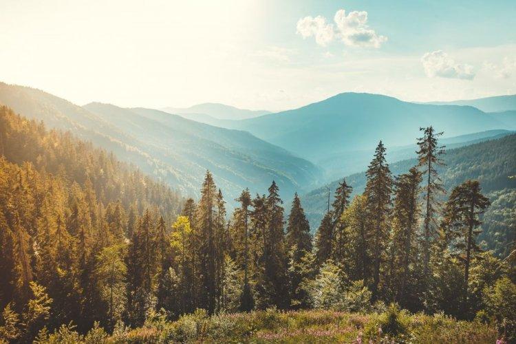 Екоактивісти обурилися винищенням карпатських лісів