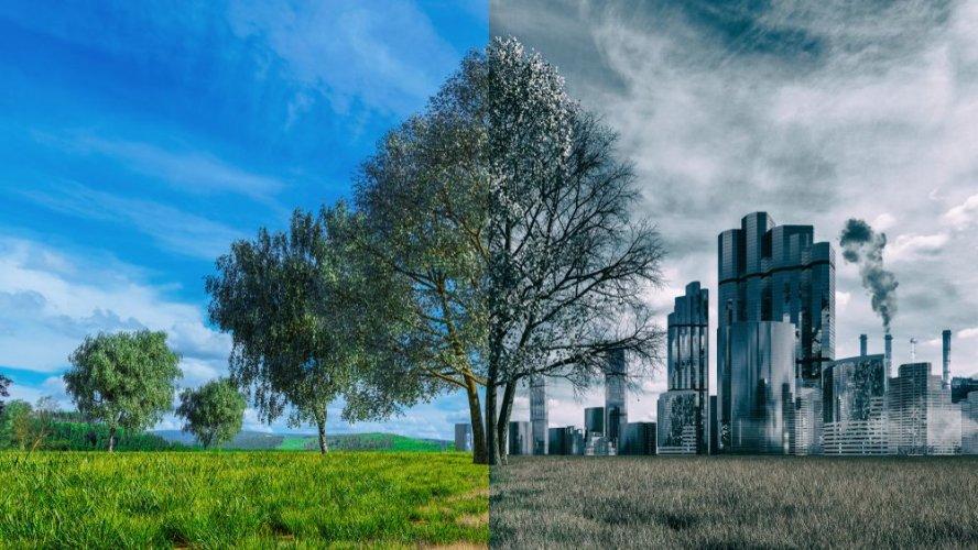 Зелений енергетичний перехід та законність вирубки лісів: ТОП заходів у сфері захисту довкілля