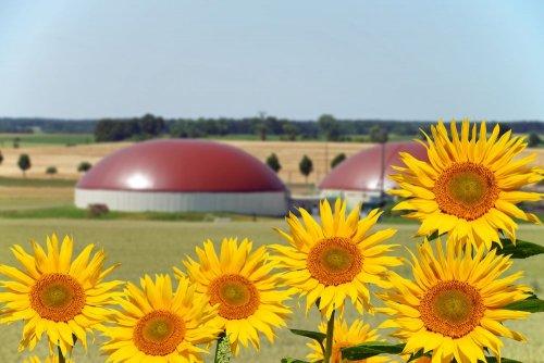 Эксперты рассказали, как из подсолнечника получают биогаз