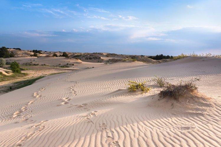 В Херсонской области хотят продать земли заповедного фонда