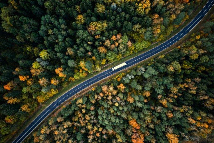 Кліматична абетка та збереження лісів: які екологічні заходи відбудуться на початку червня