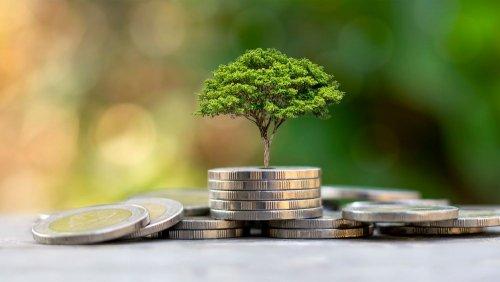 Эколог раскритиковал наполнение бюджета путем эконалога