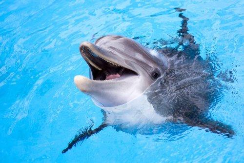 Дослідники підрахували, скільки дельфінів живе в Чорному морі