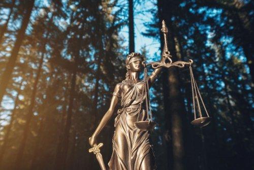"""Громадська організація """"ЛІіС"""" виграла суд у лісгоспу за ненадання доступу на публічну інформацію"""