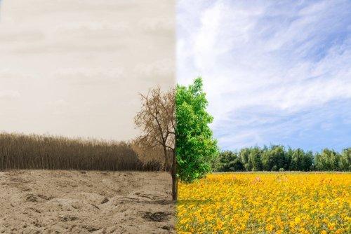 Міндовкілля опублікувало законопроєкт «Про екологічне страхування»: що передбачає